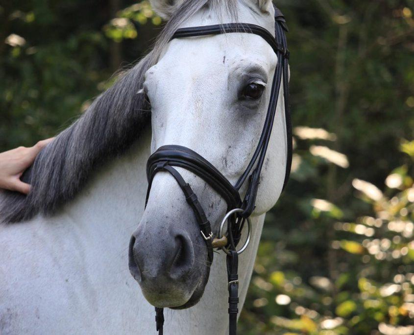 Leasure horse