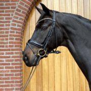 Compettion horse