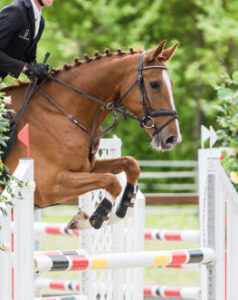 Show jumping prospect