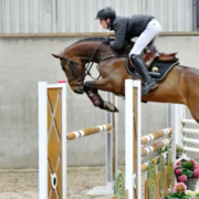 KWPN show jumping horse